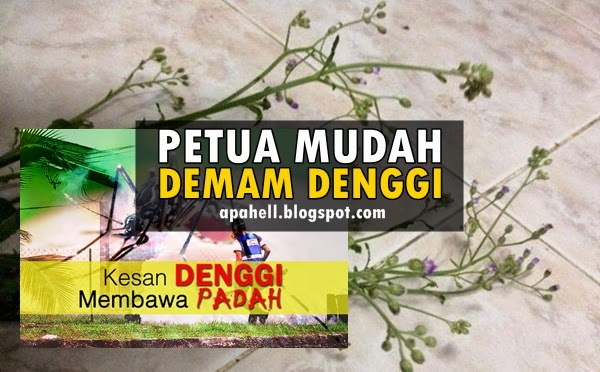 Pokok Liar Penawar Mustajab Demam Denggi (5 Gambar) http://apahell.blogspot.com/2014/09/pokok-liar-penawar-mustajab-demam.html