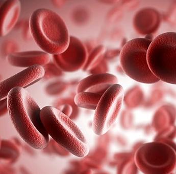 Manfaat Dan Fungsi Darah Dalam Tubuh