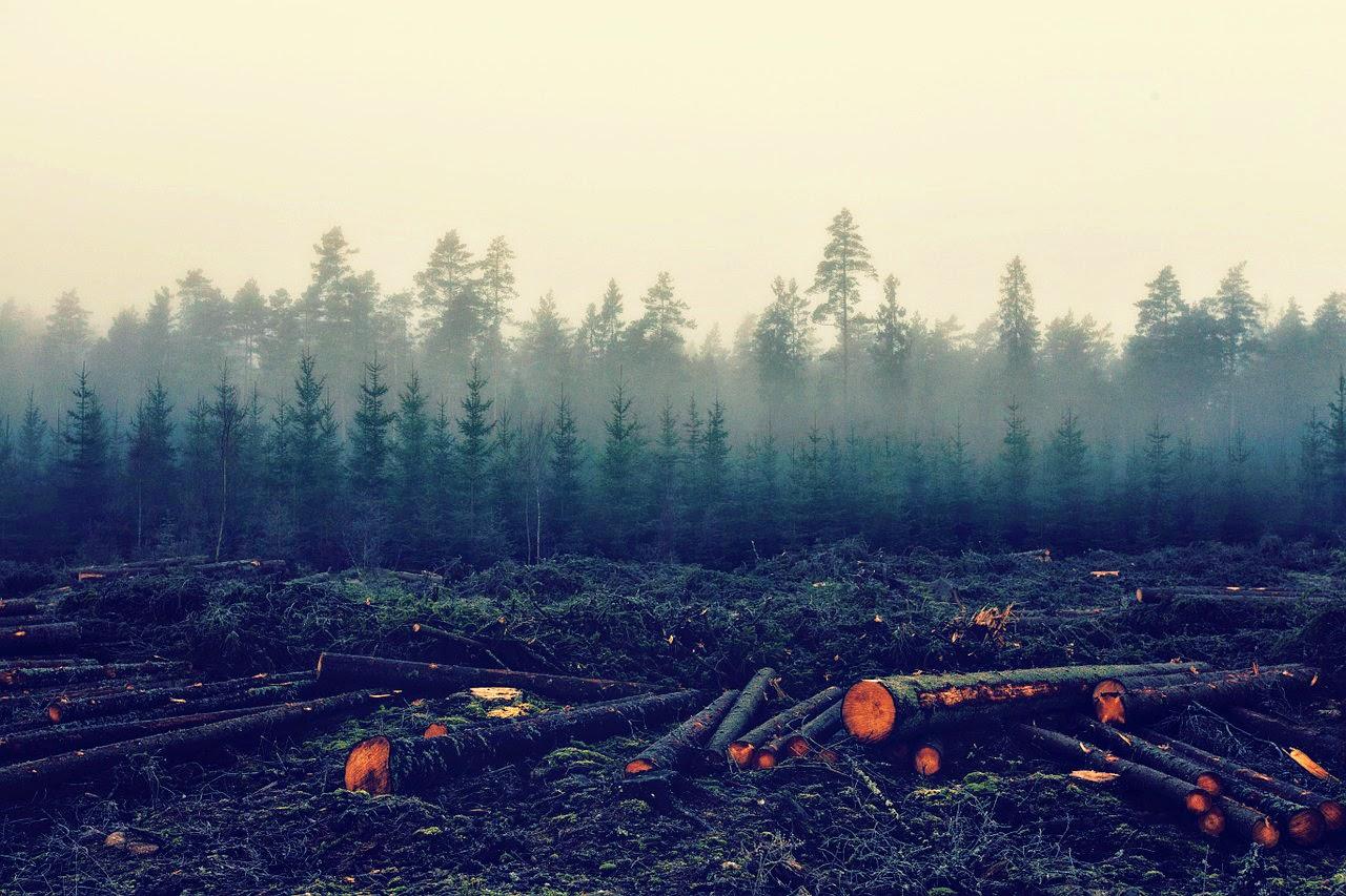 erdő-visszaszolgáltatás, Románia, Viorel Hrebenciuc, korrupció, bűnszövetkezet,