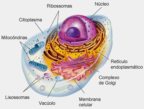 microbiolog a 3 g equipo 2 c lula vegetal y animal