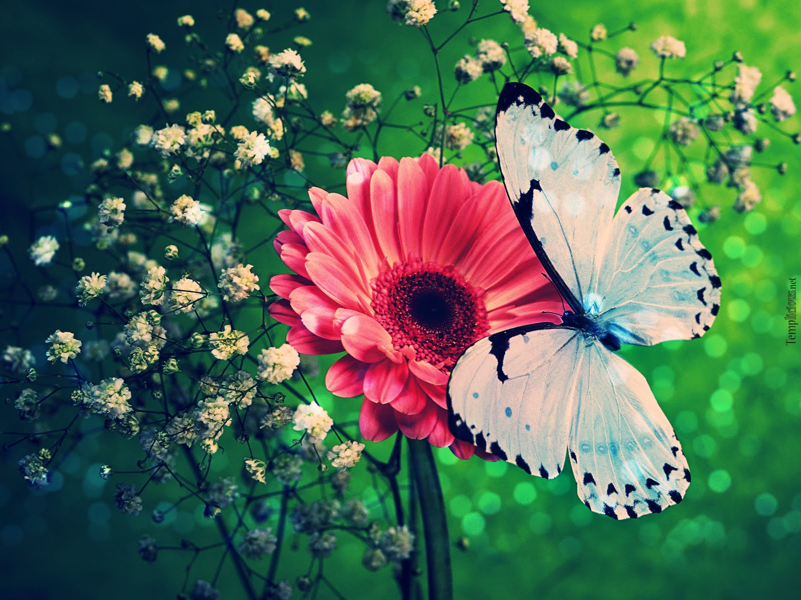 Blue Butterfly Wallpaper Normal