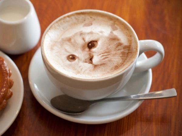Notable arte del café con leche presenta gatos fotorrealistas y lucen demasiado impresionantes como para beberlas