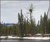 Eagles Nest Morice River