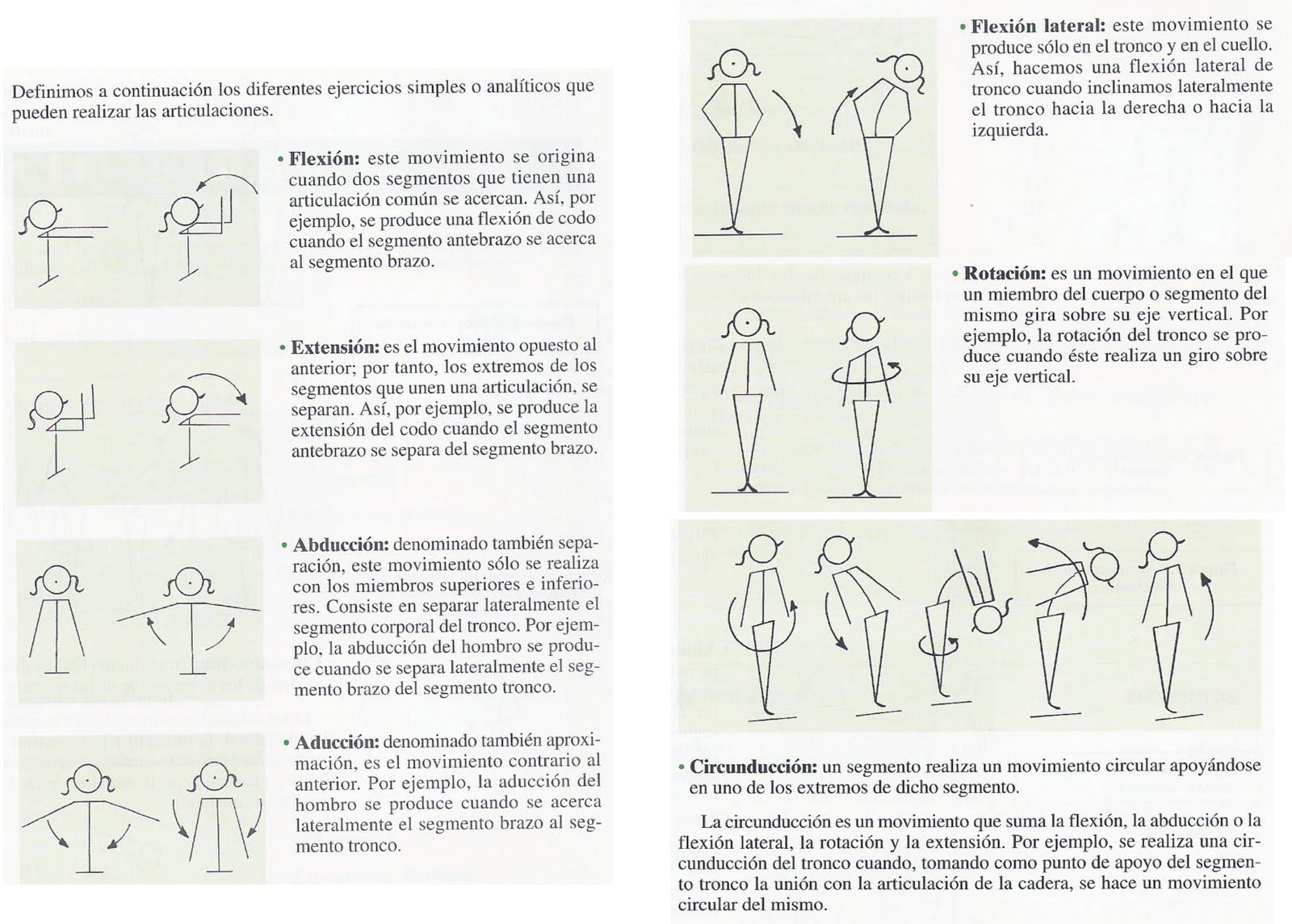 Bonito Movimientos De La Anatomía Del Cuerpo Colección - Imágenes de ...