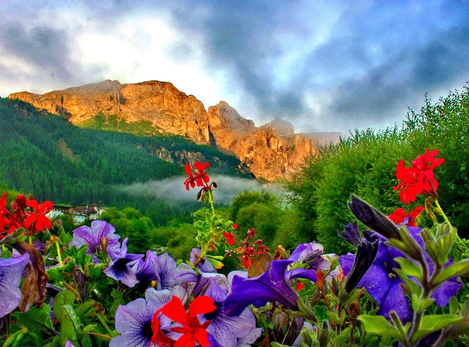 Wallpaper Mountain Flower Extreme Beauty Of Nature