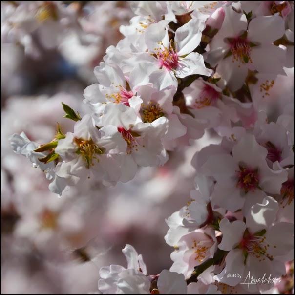 Primavera a la vista - Fotografía