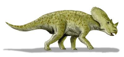 Brachyceratops skull