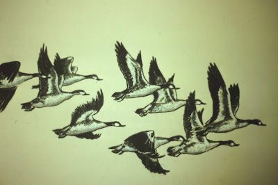 Canada Geese, Montrose, Scotland - Charcoal by F. Lennox Campello, c. 1989