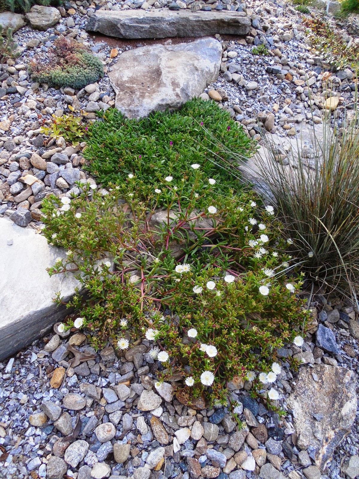 Prairiebreak A rock garden in the Southeast