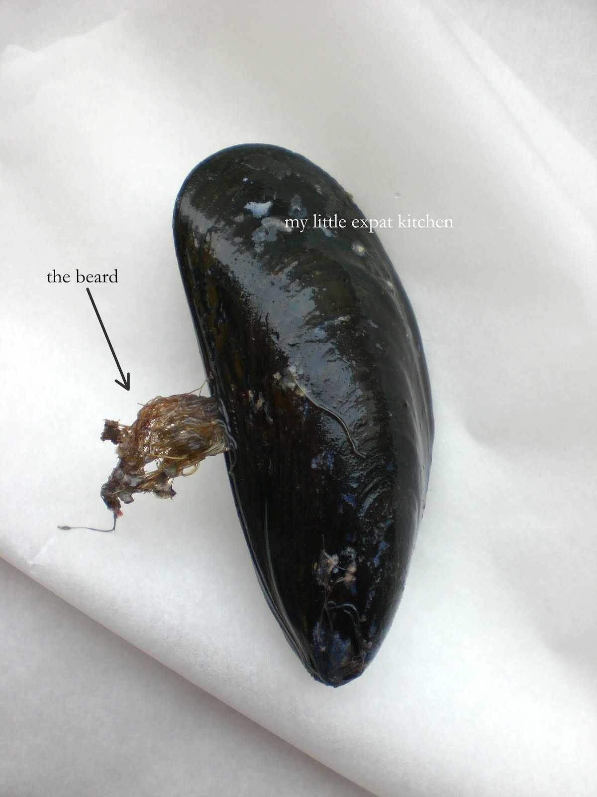 How to clean mussels 87
