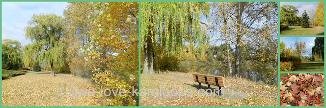 A collage of different views of McArthur Island on this sunny fall day.