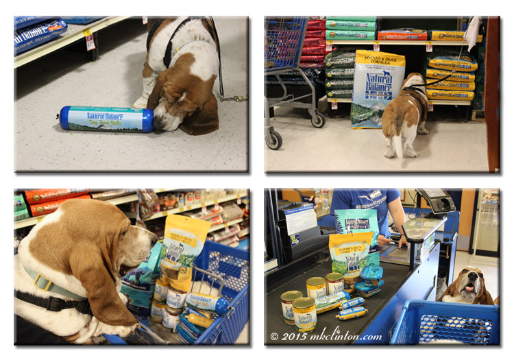 Basset making his Natural Balance selections at PetSmart