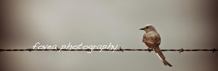 Fovea Photography