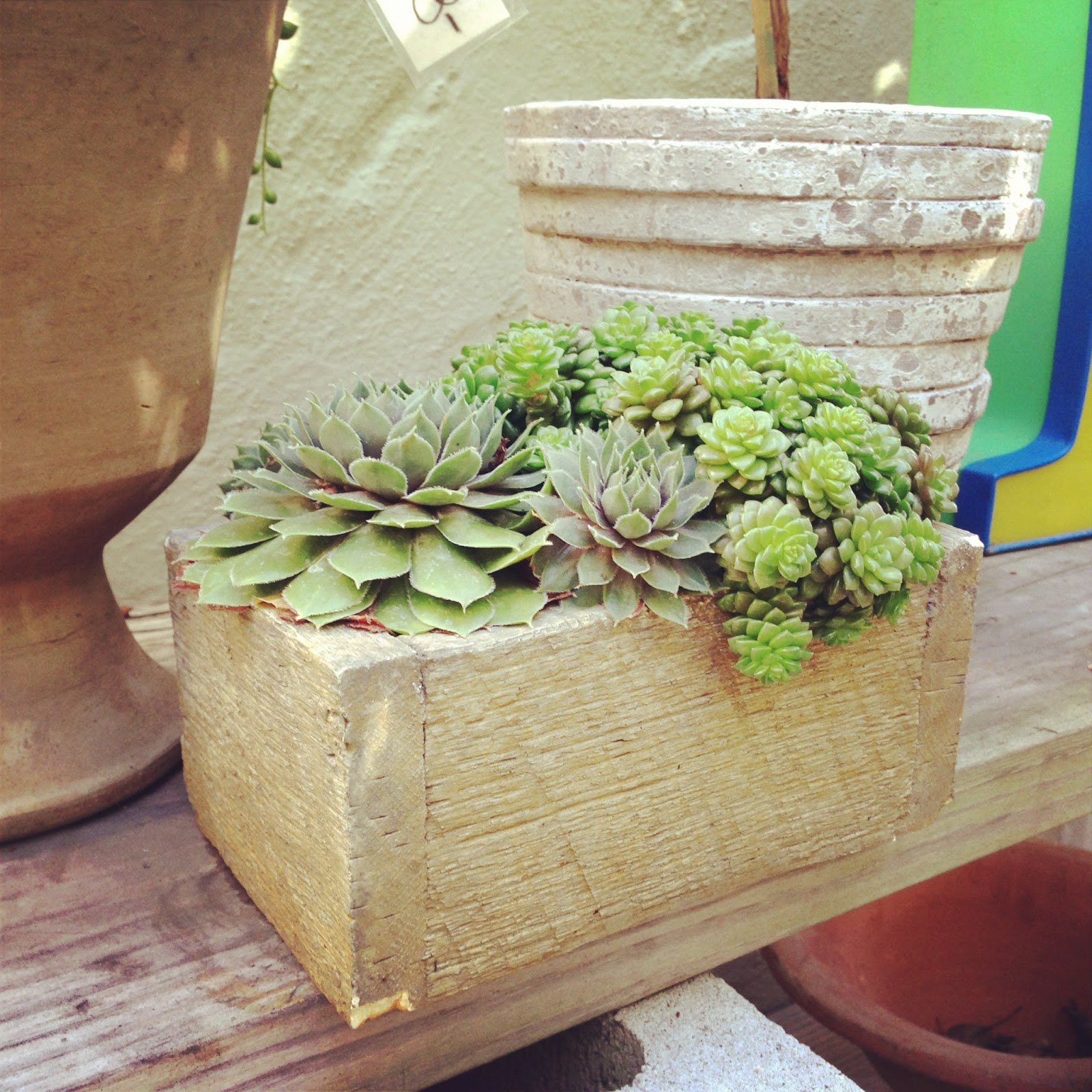 Molly Wood Garden Design Fall Hourpost