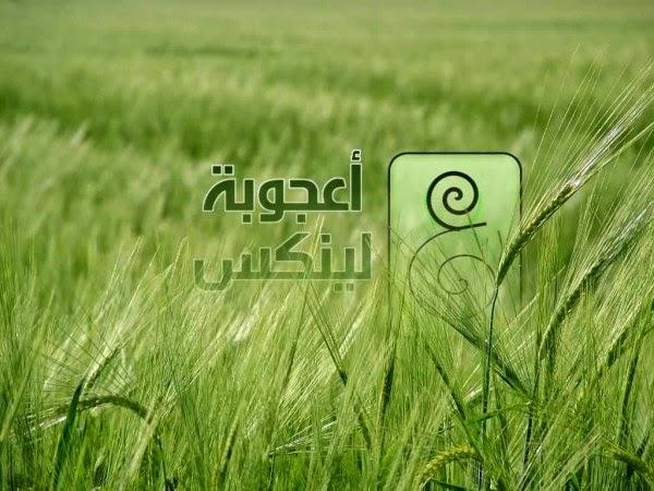 تعرف على التوزيعة العربية الرائعة (أعجوبة لينكس) - وادى مصر