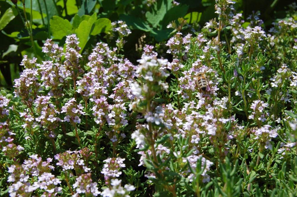 Insekten an Blütenblumen