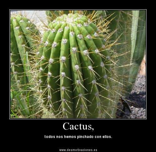 Desde peque ito crece el arbolito ahora tambi n tenemos - Informacion sobre los cactus ...