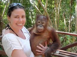 orang/utan/for/indonesian/heritage/animal/kalimantan/indonesia