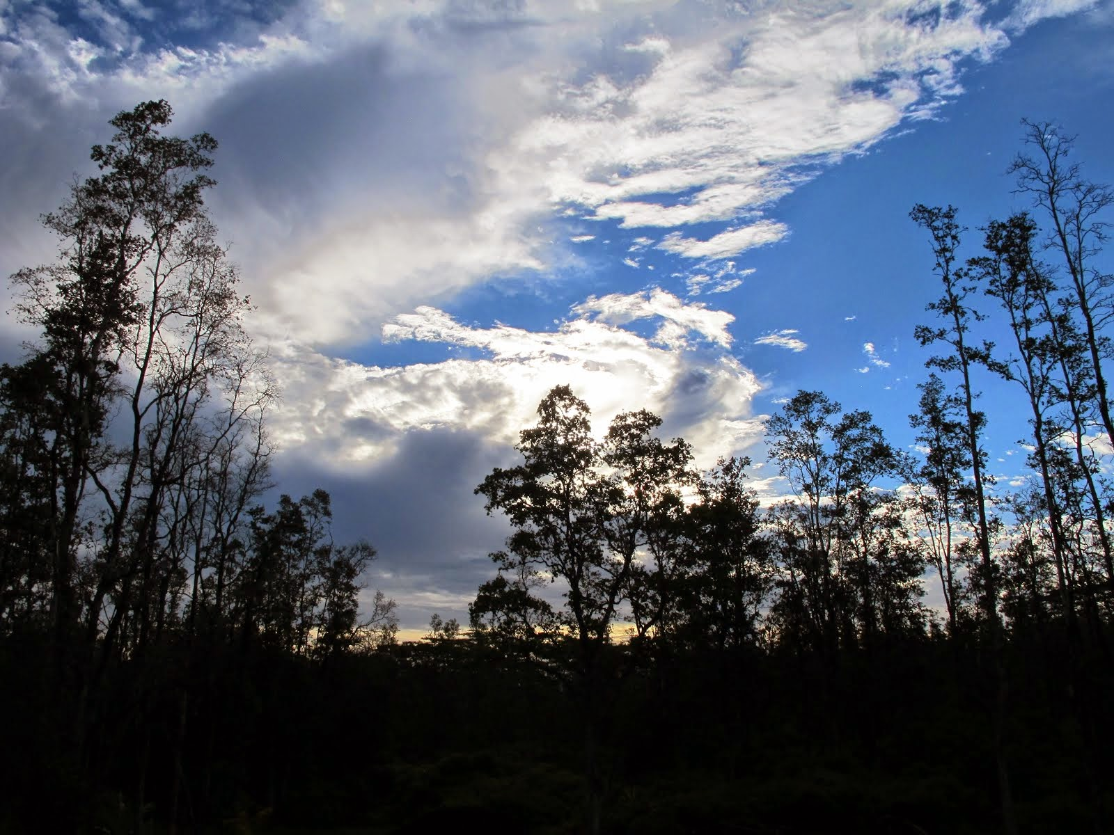 rainforest sky