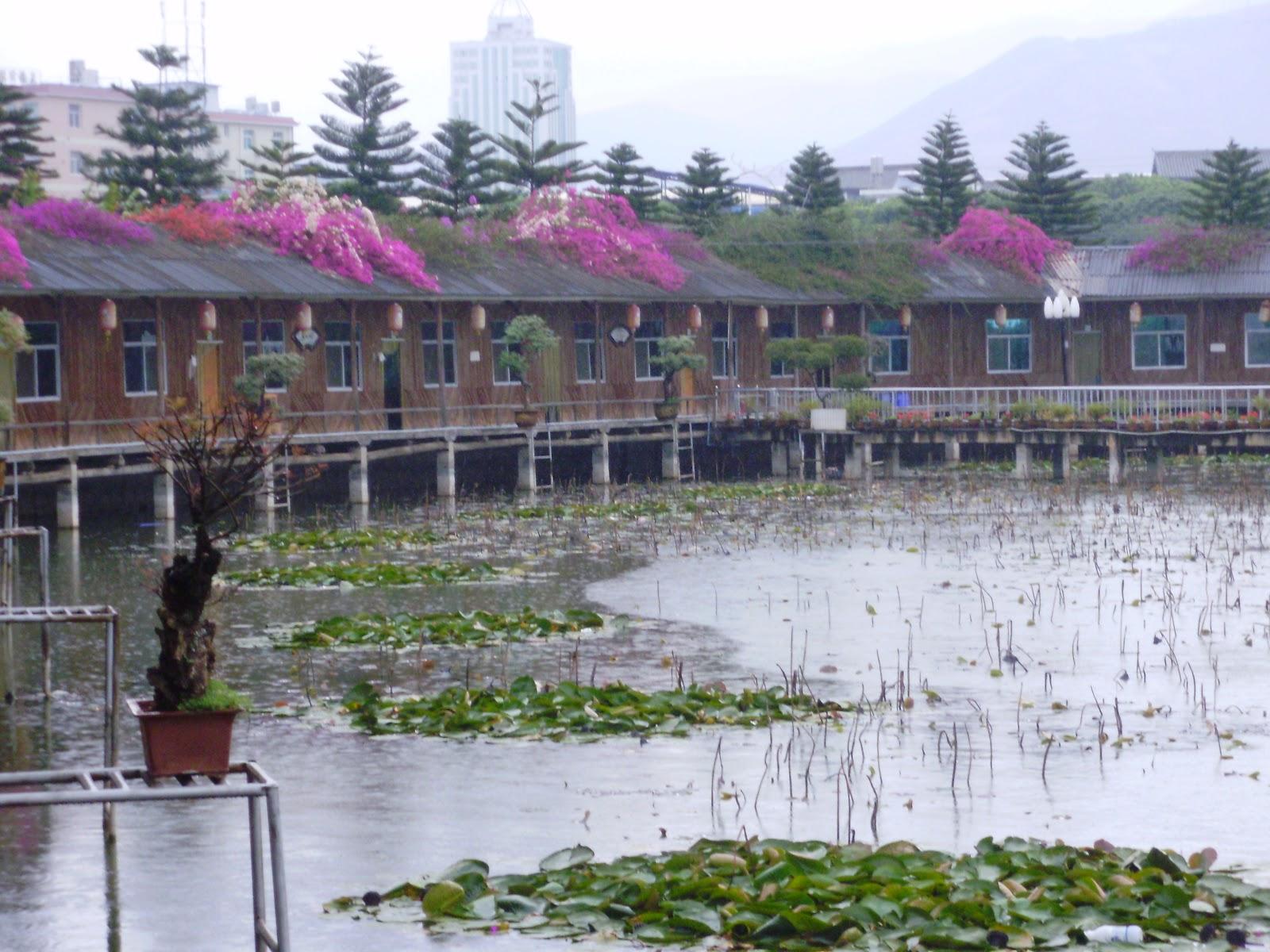 2011 yunnan mardi 15 mars de puzhehei jianshui for Au jardin de la famille de fabreville
