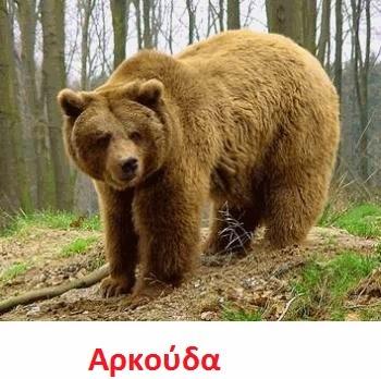https://dl.dropboxusercontent.com/u/72794133/%CE%96%CE%A9%CE%91/bear2.wav