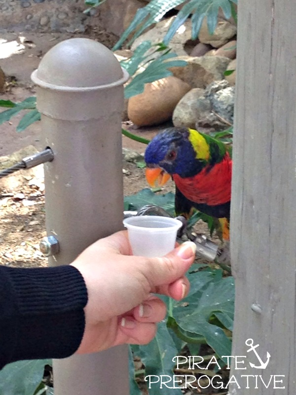 Have you ever fed the Lorikeets? They love nectar and you can feed them in Lorikeet Landing at the Safari Park.