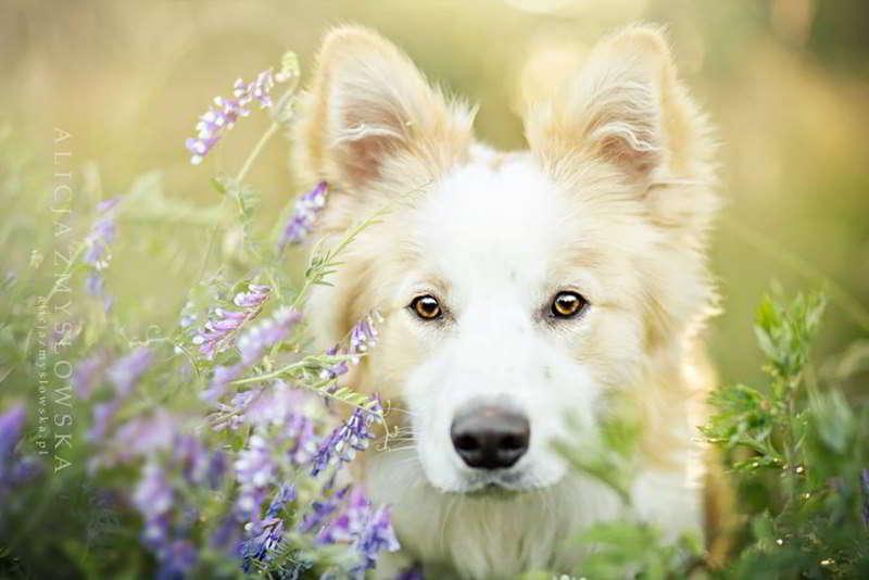 dog-photography-alicja-zmyslowska-13