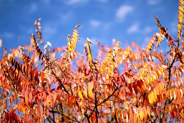 fall, autumn, colors