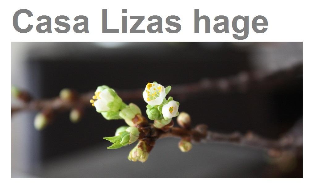 Casa Lizas hage