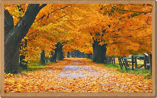 Los preguntones mx por qu caen las hojas de los arboles for Arboles que no se le caen las hojas en invierno