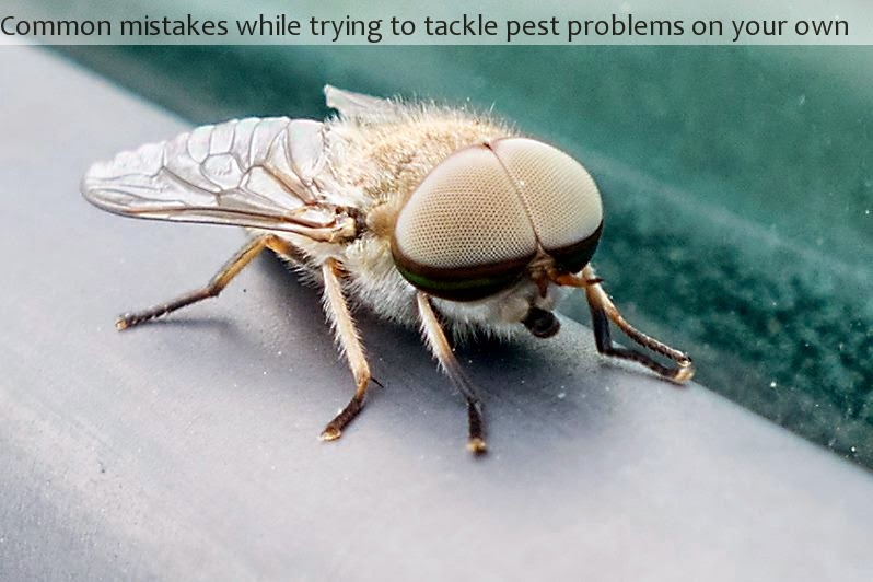 Common mistakes while trying to tackle pest problems on