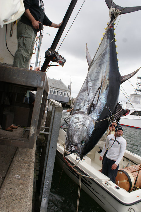 Kite fishing for giant tuna for Kite fishing for tuna