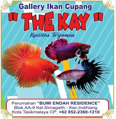 Galeri Cupang The Kay