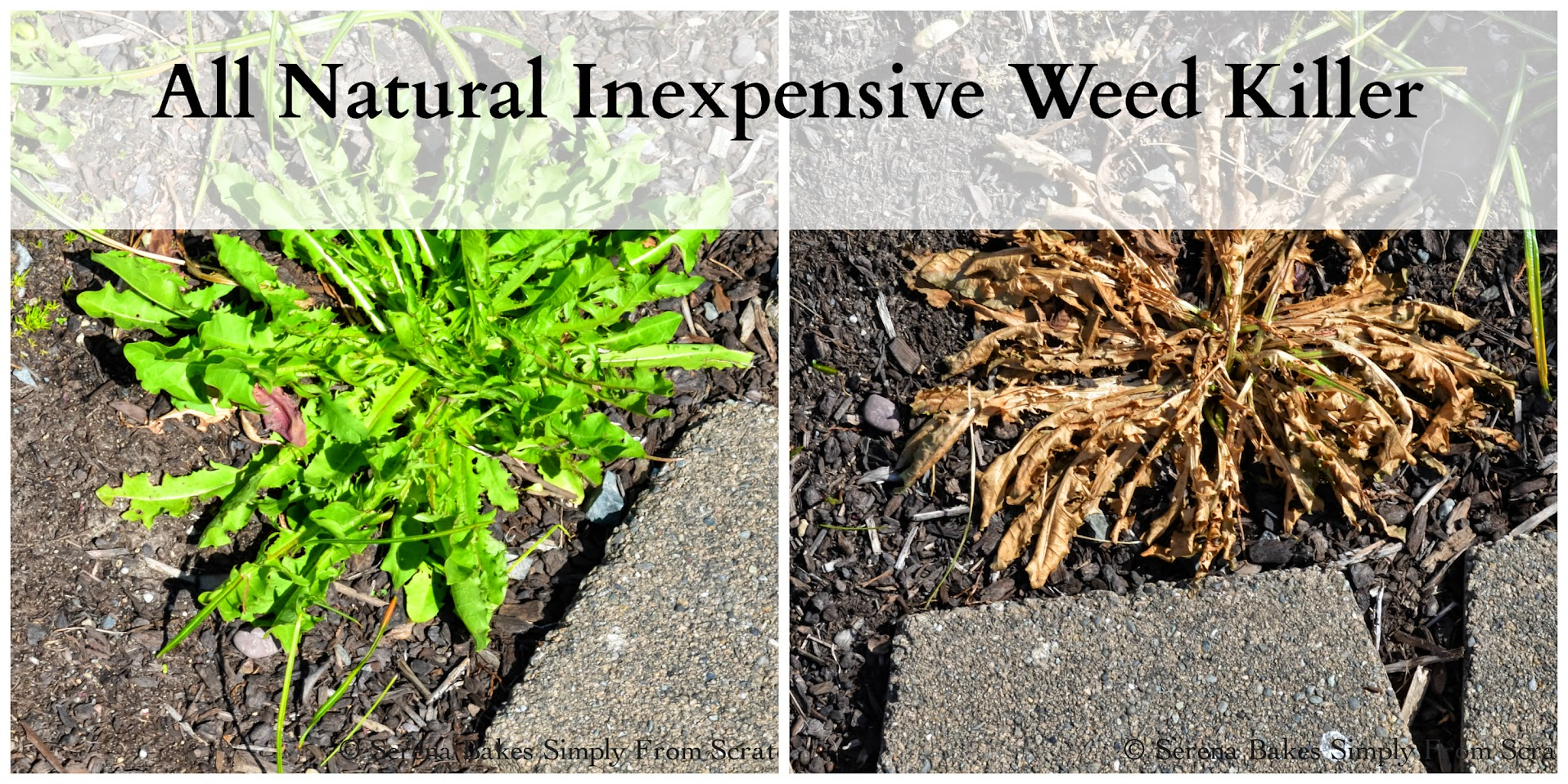 All Natural Inexpensive Weed Killer