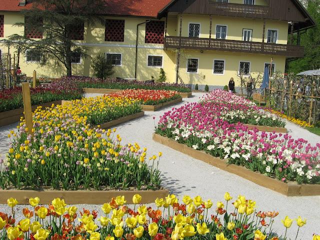tulipani ad Arboretum