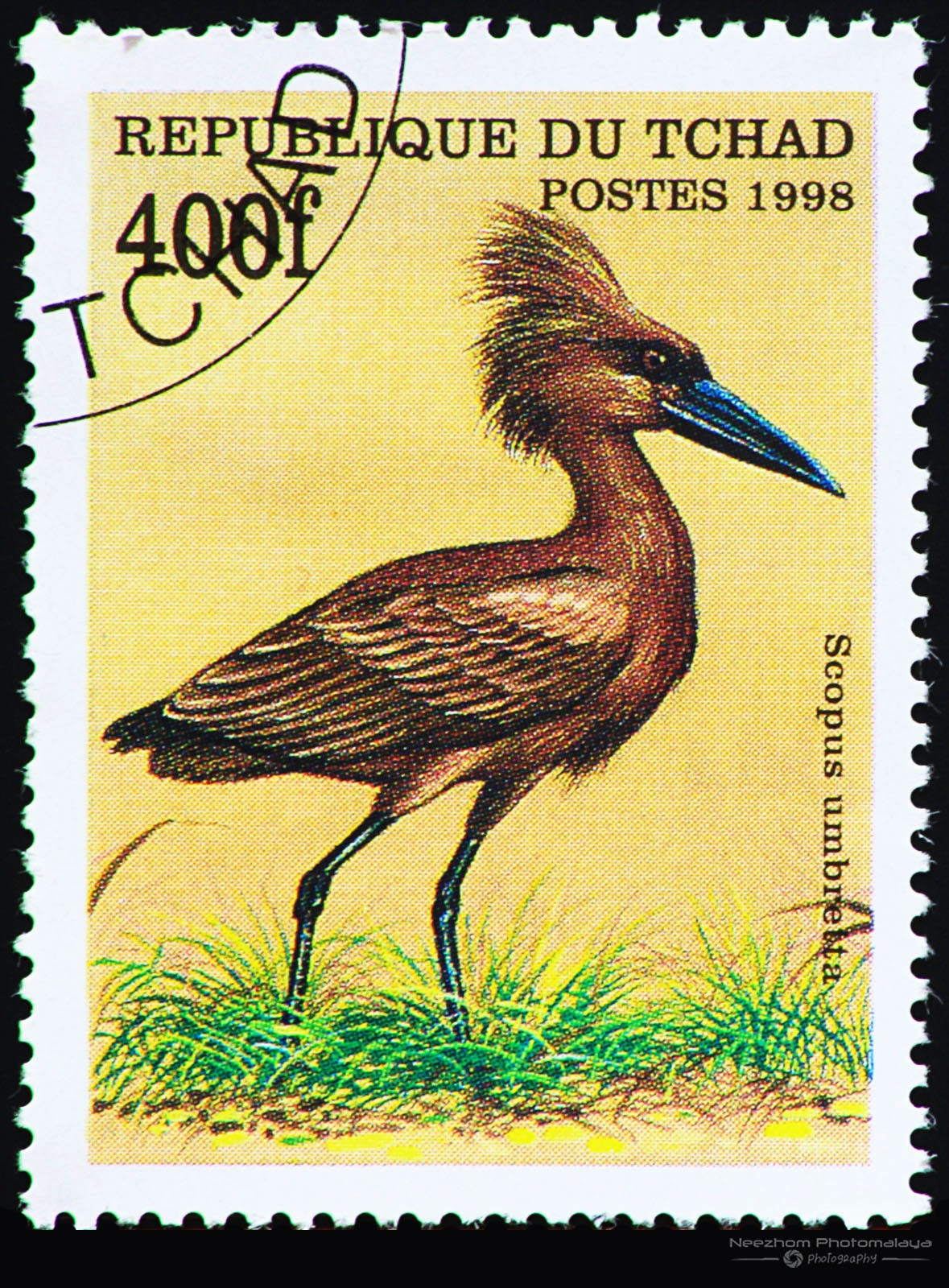 Chad 1998 Birds stamp - Hamerkop (Scopus umbretta) 400 f