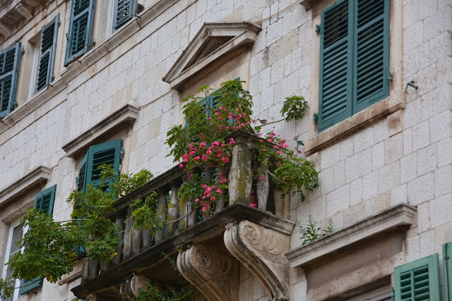 Old Town Kotor flowers