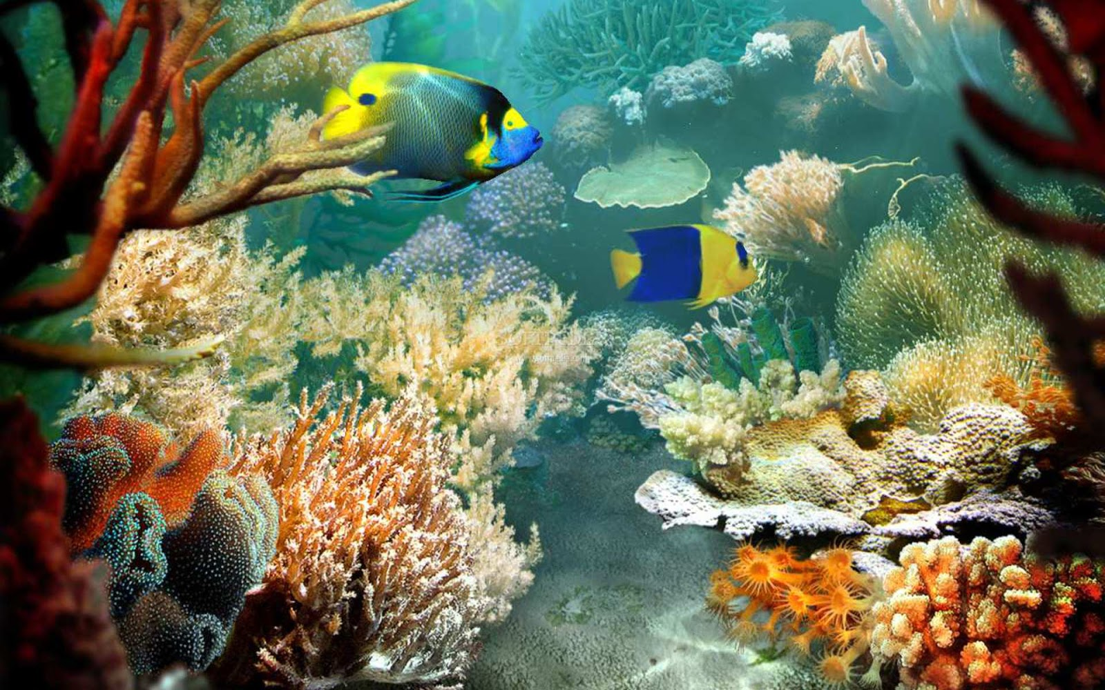 Download free ocean wallpapers most beautiful places in for Reef aquarium fish
