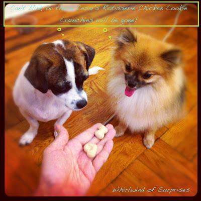 JR & Baby Pom Reviews Rotisserie Chicken Cookie Crunchies
