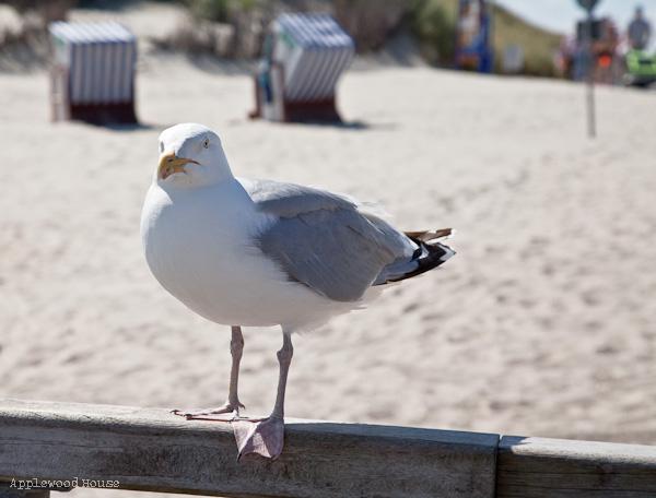 Möwe Norderney Strand