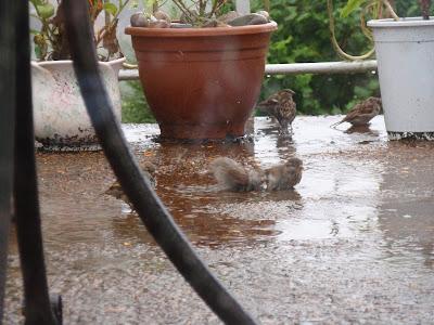 Happy sparrows 8