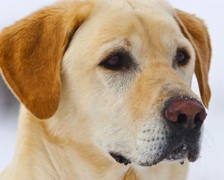 Juiz francês interroga um cão como testemunha de um homicídio