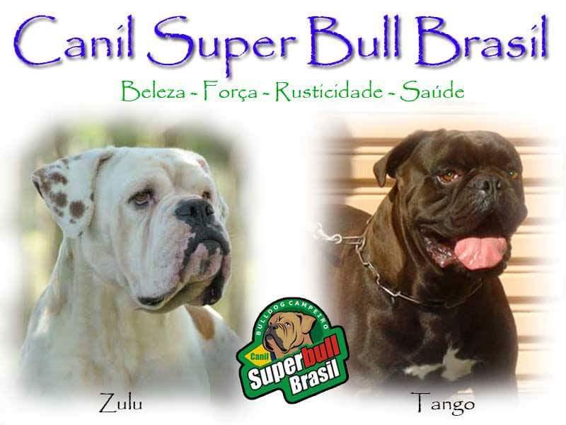 Canil Super Bull Brasil
