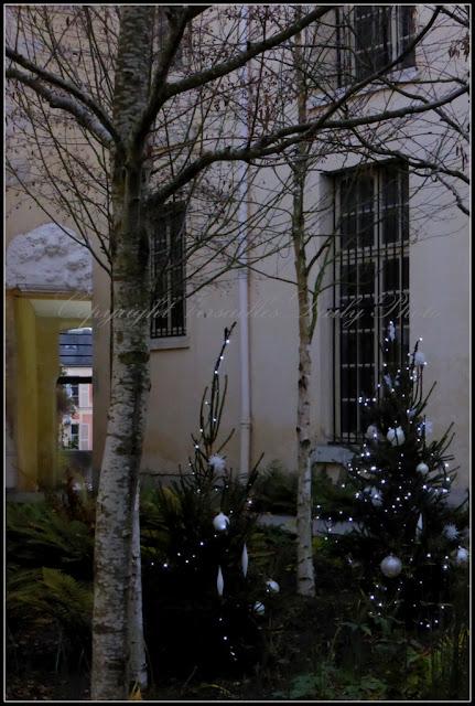 Sapins Noël Cour des Senteurs Versailles