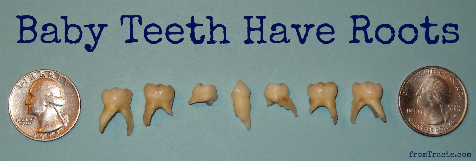 extracted baby teeth with roots
