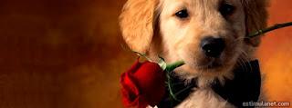 Capas para Facebook: Animais - Cachorrinho filhote entregando rosas