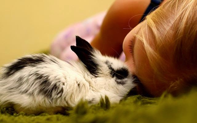 Baby and animals 1.