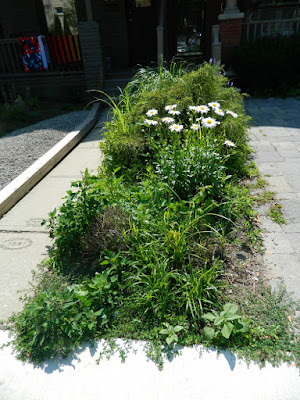 Leslieville front garden renovation before Paul Jung Toronto Gardening Services