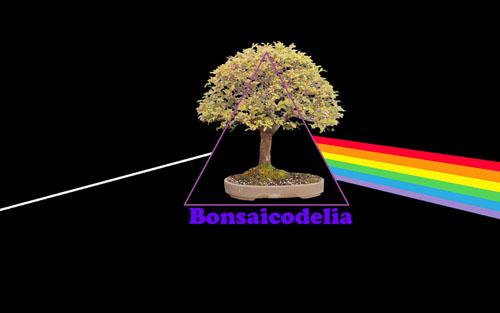 bonsaicodelia