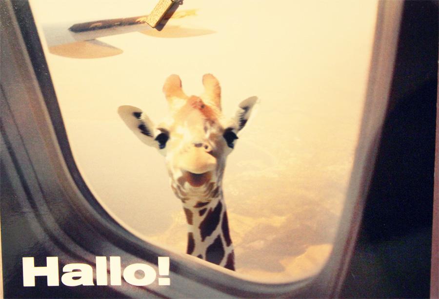 tkgrphy: Sprechende Giraffen, die durch Flugzeugfenster schauen sind ...